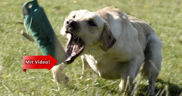 Markieren und apportieren macht Hunden Spaß