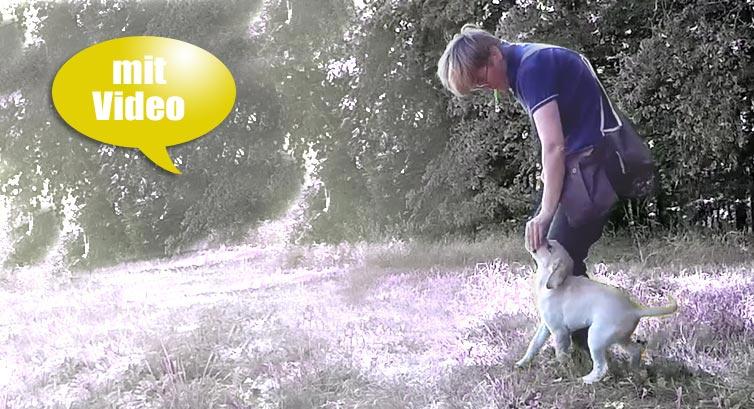 Frei Bei Fuss-Gehen mit dem Hund