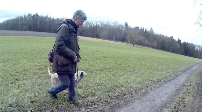 Bei-Fuß-Gehen an der Leine muss geübt werden, hier Rechts-rum-Drehung