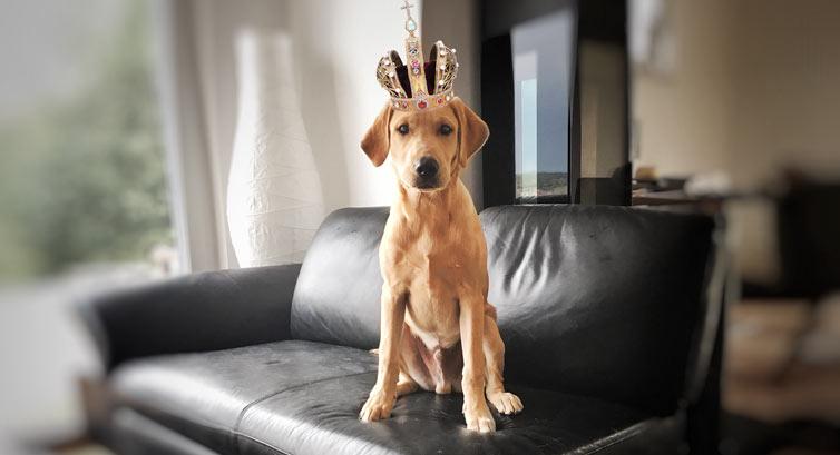 Wann darf der Hund mal Hund sein?