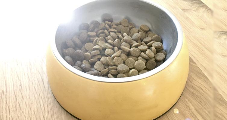 Trockenfutter für den Hund, eine gute Idee?